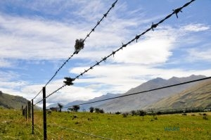 Barbed Wire Fence Installation