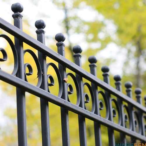 A Close Up Picture of a Wrought Iron Fence.